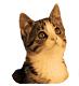 Höörs Hemlösa Katter